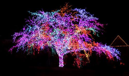 Дерево, подсвеченное светодиодными гирляндами