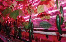leds-in-plant-growth_05